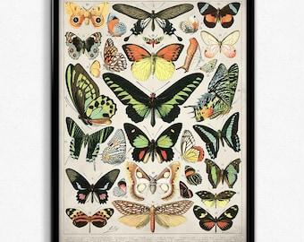 Butterflies Vintage Print 2 Butterflies Poster Butterfly Art Home Decor Home Art