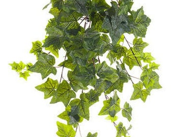 Set of Three Large Ivy Leaf Hedera