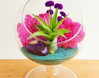 "Air Plant Terrarium Kit / 4"" Round Glass Pedestal / Turquoise Passion"