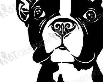 Boston Terrier - Close-up Cutie - 8 x 10 DIGITAL FILE