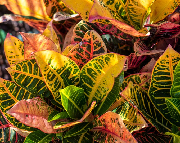 COLORFUL CROTON | modern fine art photography blank note cards custom books interior wall decor affordable pictures –Rick Graves