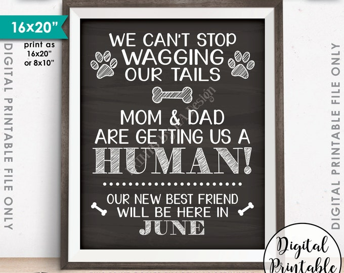 "Dogs Pregnancy Announcement, Mom & Dad are Getting Us a Human Baby Due in JUNE, Chalkboard Style PRINTABLE 8x10/16x20"" Instant Download Sign"