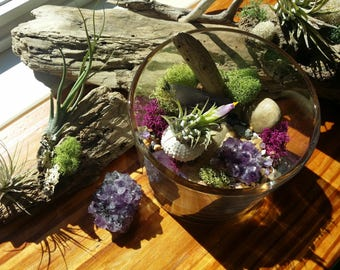Enchanted Air Plant Terrarium | Tillandsia | Beach Decor | Amethyst | Round Glass Terrarium | Air Plant Gift | Airplant | Crystal Garden