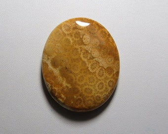 Fossil Coral Oval Cabochon - 36X44 mm - 79.25 Ct CABFCOR7