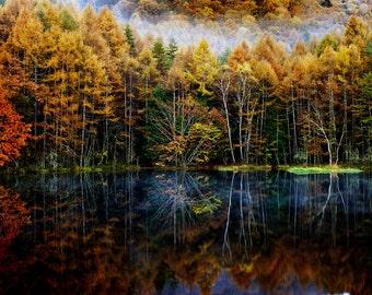 panoramic print, nature wall art, trees reflection, Japanese art print, nature photograph, autumn colors, orange and black, lake photograph