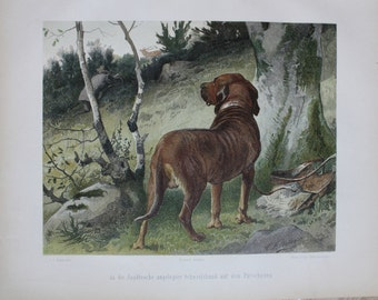 original lithografic print hunting dog 1897