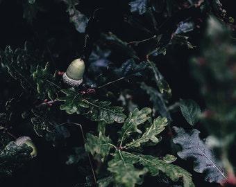 Acorn Print - Oak Digital Photo - Acorn Printable - Forest Photography - Nature Photo - Digital Photo - Digital Download - Instant Download