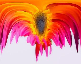 Sunflower Original Photography Print