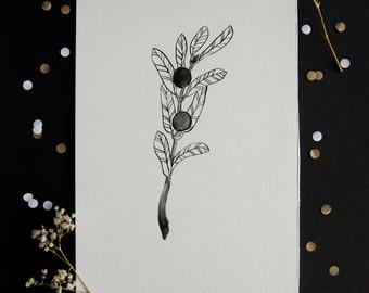 Olive branch - hand drawn A5 illustration - indian ink - minimal - botanical illustration