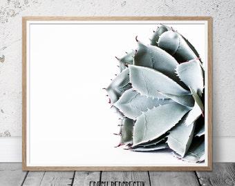 Cactus Print, Succulent Print, Wall Art Print, Cacti Print, Botanical Print, Cactus Art, Cactus Poster, Cactus Photography, Printable Art