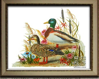Mallard Duck Print. Farmhouse Decor. Mallard Duck painting. Signed by Artist. Original wildlife gifts. 8 x 10 and 12 x 16 inch