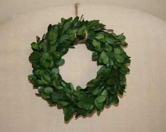 "Preserved Mini Boxwood Wreath - Christmas wreath - Boxwood Wreath - Small Boxwood Wreath - approx. 6"" diameter"
