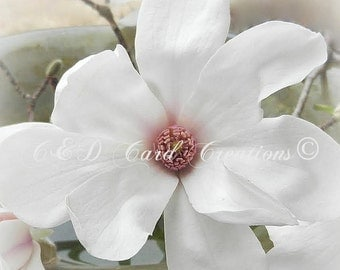 Star Magnolia Card, Floral Greeting Card, All Occasion Card, Floral Photography Card, Greeting Card, Blank Card, Original Photography