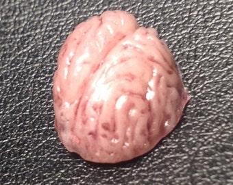1 inch brain