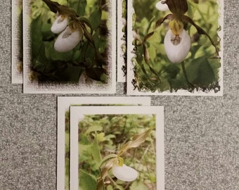 """12 Mountain Lady Slipper Orchid (3 Designs) Notecards 4 1/4"""" x 5 1/2"""" with Envelopes P9"""