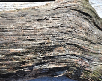 Weathered Oak Slab with Gorgeous Grain