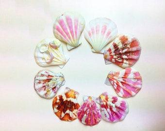 60 pc Lot Colored conchas 3-4cm Crafts Materials Decorative Seashells Crafts Aquarium Ornament  Home Decor
