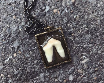 Tiny coyote tooth necklace