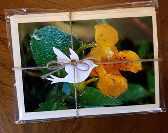 Morning Dew Note Card Pack