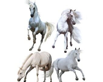 White horse overlay photo animal photoshop png