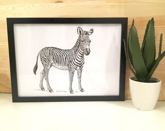 Zebra Illustration Black and White Art Print With Frame Included