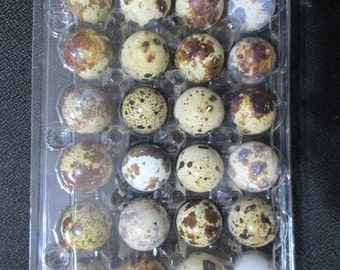48 quail eggs and quail egg scissors