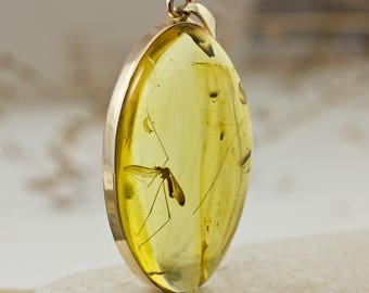 Amazing 14k Gold and Baltic Amber Pendant With Fossil Insect