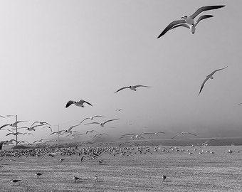gulls in flight, seabirds, motion, grey,