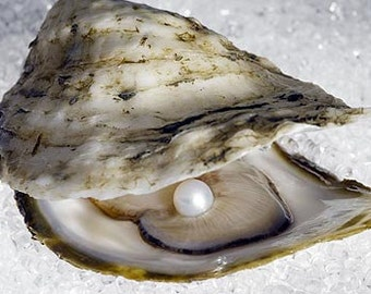 TWIYO Pearl Oyster