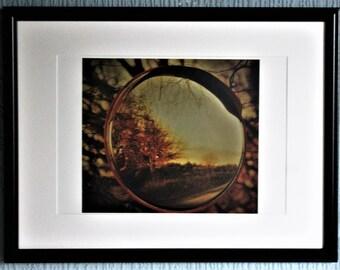 Tree reflected in hedge mirror like a car headlight 8 x 12