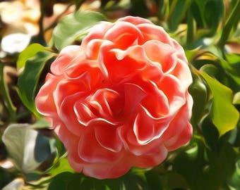 Digitally Enhanced 8x10 Photo Print - Peach Flower
