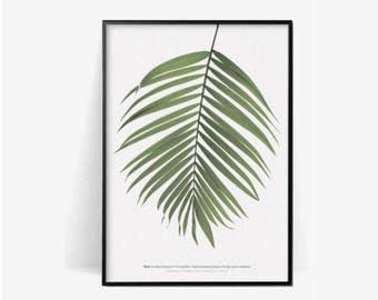 palm leaf botanical poster print/palm leaf print/plant print/herb poster print/botanical print/palm leaf photography print/plant green print
