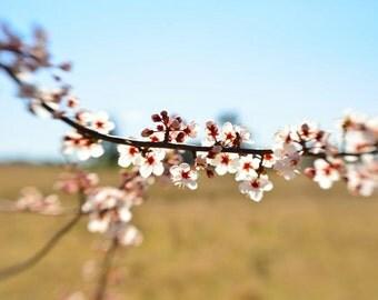 Backlit & Blooming