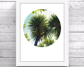 Palm Trees New Zealand Printable Art Photography Download