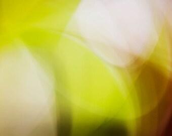 Limey — photograph — Giclee art print
