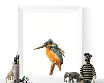 Bird Printables | Kingfisher Art | Photo Printable | Bird Prints  | Kingfisher Prints | Bird Art | Digital Download