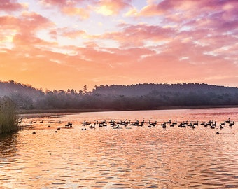 Birds on a Lake at Dawn Greetings Card