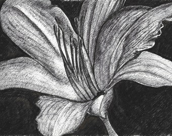 Pen Drawing Flower in Black and White, Drawing on White Paper with Black Ink on A4 Paper Size, Black & White Art for Living Room