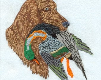 Irish Setter Dog 22
