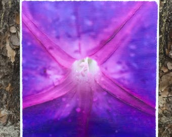 8x10 Beach Flower