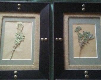 Unique set of dried wild flowers