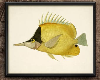 Chelmon · Instant Download · Vintage · Fishes · Wall · Printable · Digital File #113