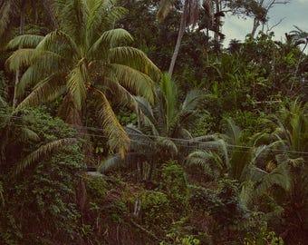 Palm Forest Digital Download