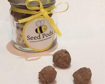 Bee Friendly Seed Bombs
