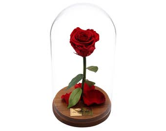 Beauty And The Beast Rose, Live Forever Rose in Glass, Live Enchanted Rose, Preserved Rose %100 Natural LFR0002