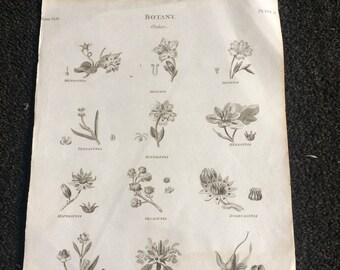 Botanical bookplate antique  1803