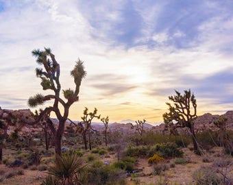 Desert Sunset Print on Canvas, Joshua Tree National Park, Yucca Palms, California Photography, 16x20 to 24x36 Inch Large Wall Art