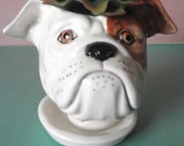 Winston Bulldog planter