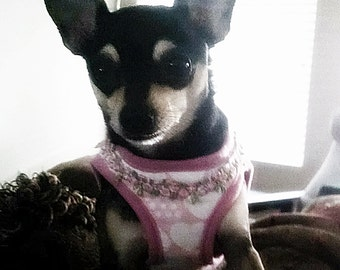 Dog Collar Pink Harness for Dogs Wedding harness Step in pull up harness