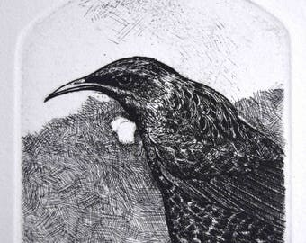 Exotic bird original etching